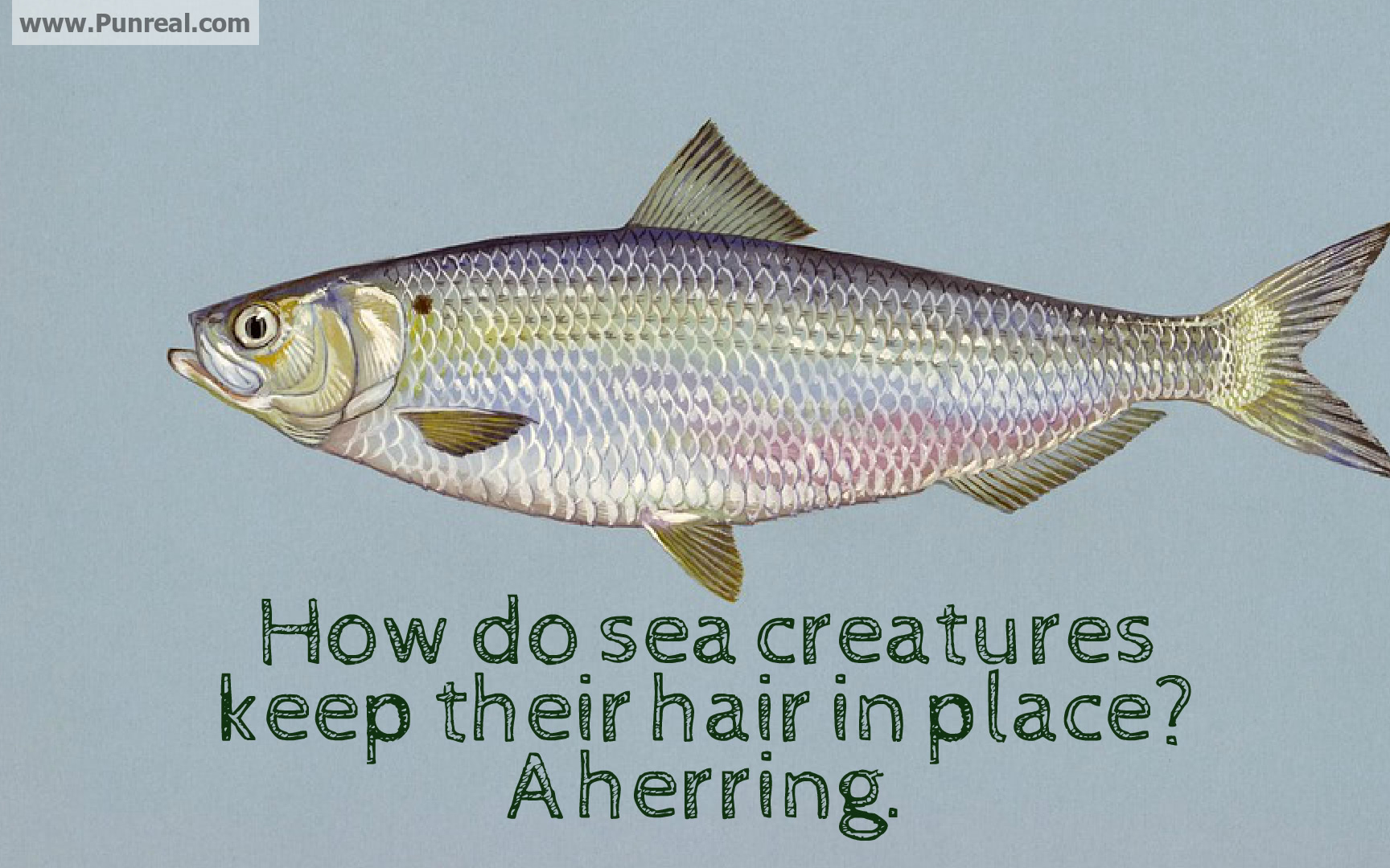 How do sea creatures keep their hair in place? A herring