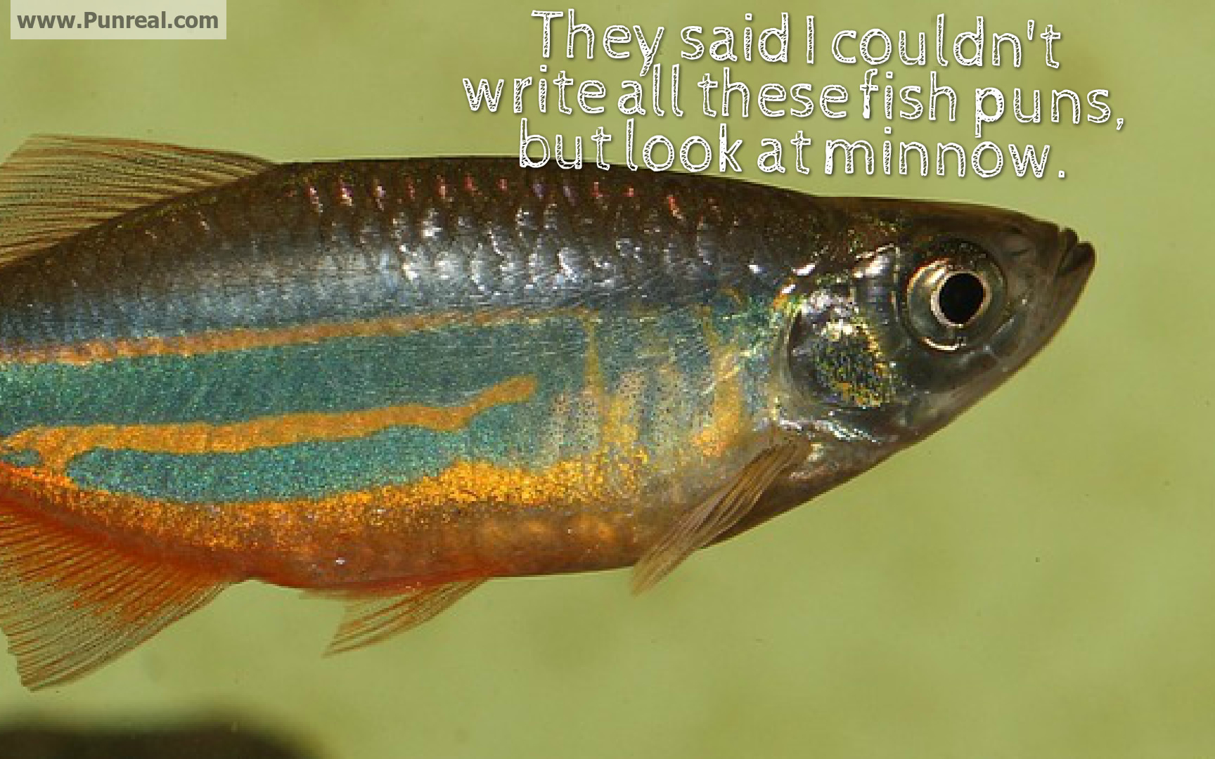 They said I couldn't write all these fish puns, but look at minnow.