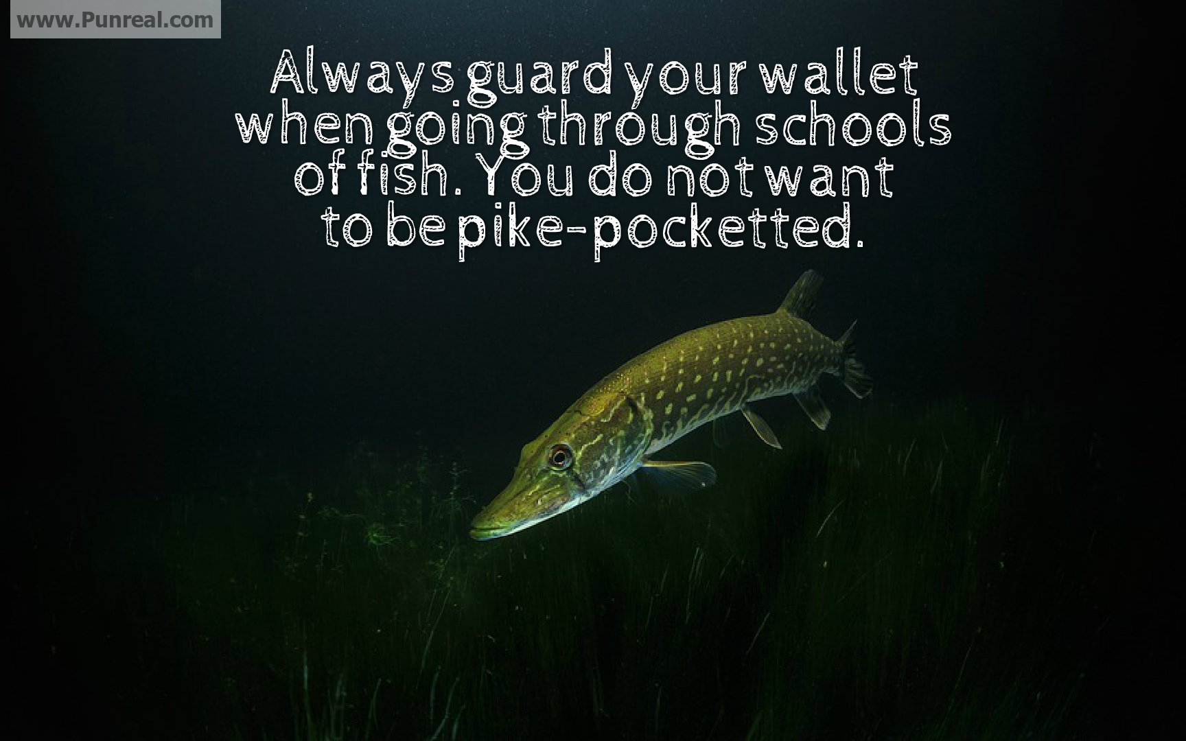 Always guard your wallet when going through schools of fish, you do not want to be pike-pocketed.