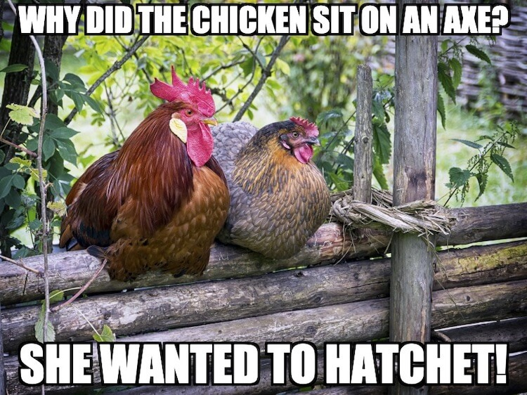 Why did the chicken sit on an axe? She wanted to hatchet!